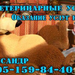 Ветаптека и ветуслуги_4